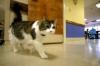 Oscar si Kucing Rumah Sakit Yang Mengetahui Kematian Pasien